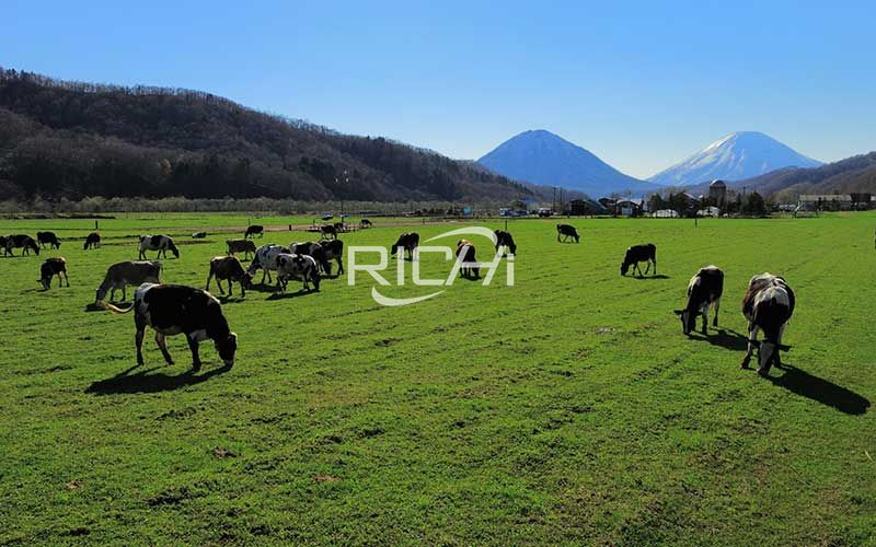 Cattle and sheep on the grassland