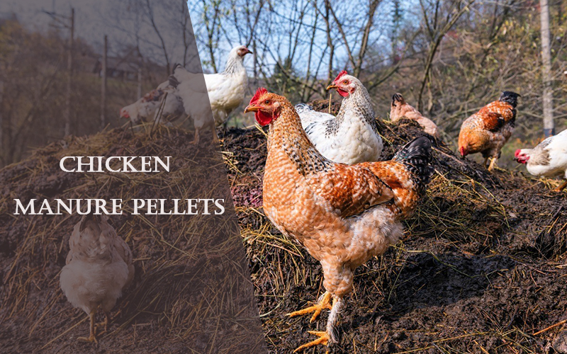 Can chicken manure be made into fertilizer pellets