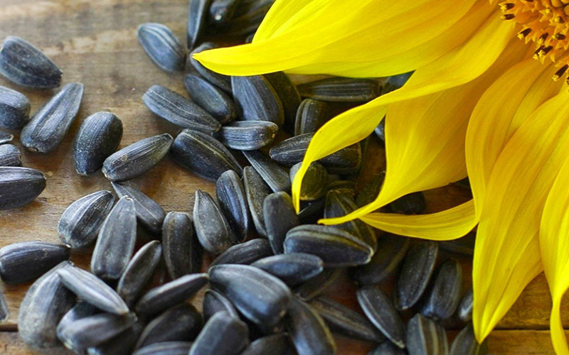 Sunflower Seed Husks Can Be Used As Fuel Pellets