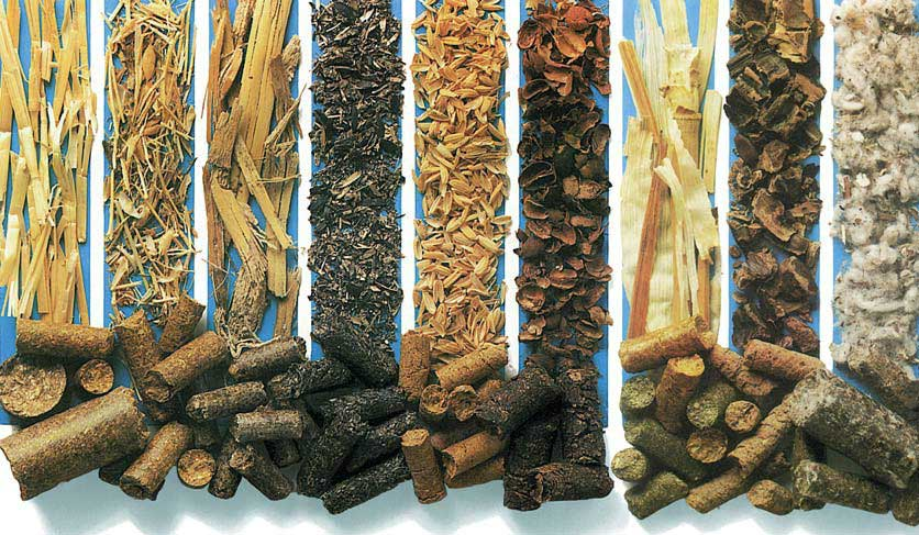 What are the raw materials of biomass